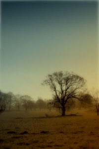 Spooky landscape: Dark landscape with bare trees
