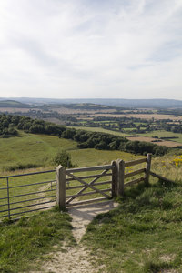 South Downs landscape: Landscape of the South Downs, West Sussex, England, in summer.