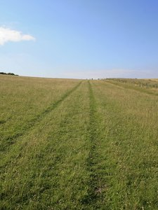Tracks on grass: Tracks on a grassy slope of the South Downs, West Sussex, England.