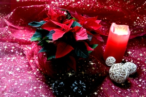 Poinsettia 1: Christmas decoration