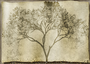 Grunge Tree: A grungy silhouette of a tree against a crazed background. Made from a public domain image.