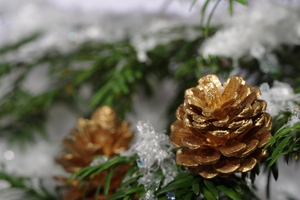 Golden cones on a tree