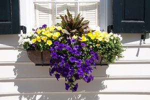 window boxes of Charleston
