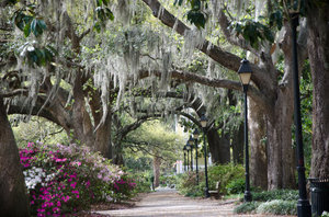 Savannah Park Path