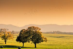 Autumn Scene near Mountains