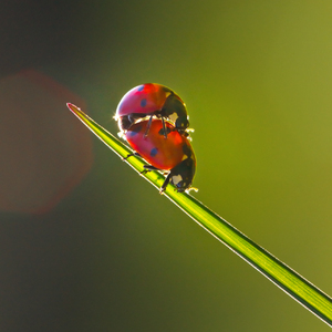 Free stock photos - high quality stock images | Ladybug Love