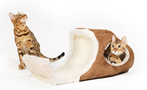 Bengal Cat playing in Playcave