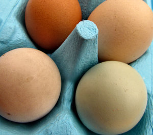 egg pack1: egg variety in colourful blue egg carton - 6 pack