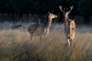 Meet the Deers