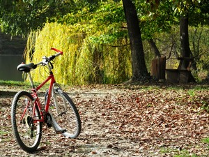 bike in autumn