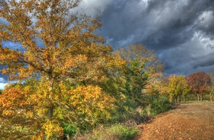 Autumn scene 3: Lovely stormy sky in background but with sun shinimg from left to highlight the Autumn colours in the tres.