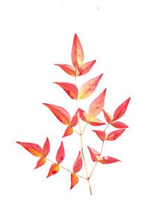 Capturing Autumn Colours