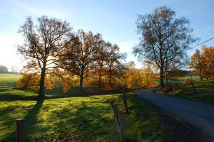 autumn sunlight
