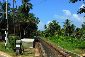 Jungle Express: Train Station in the jungle. Unawatuna, Sri Lanka.