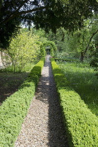 Garden path: A shingle path bordered by box (Buxus) hedges in a garden in Hampshire, England.