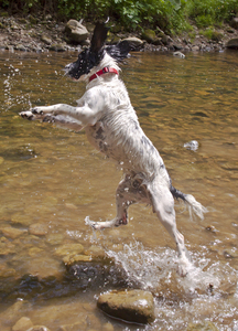 Lift Off!: The day Ruby the Springer Spaniel discovered water can be fun.