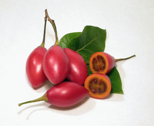 Tamarillos 1: Home-grown tree tomatos (aka tamarillos). The leaves are tomato tree's as well.