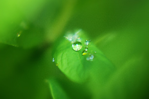 Drop on a Leaf