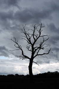 Dead tree: Spooky dead tree in winter landscape