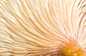 Mushroom texture 2