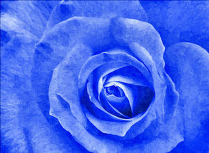 painted blue rose1