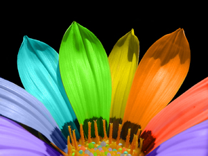 Rainbow flower: Flower in rainbow colors