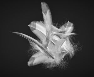 feathers: computer graphic