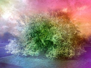 Collage Fantasy Tree 4