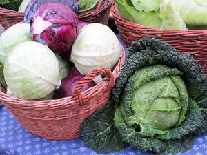 decorative cabbages 2
