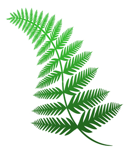 Fern 3: An illustration of a fern.