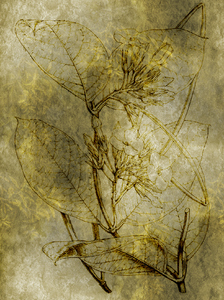 Botanical texture: A botanical drawing was used for this interesting background