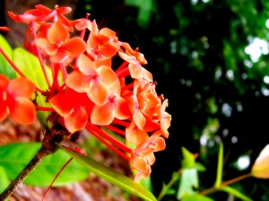 free stock photos  rgbstock free stock images  orange flowers, Beautiful flower
