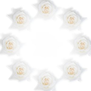 Round White Rose Border 1