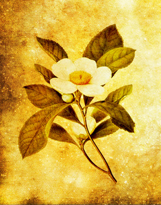 Botanical background: Botanical drawing was used for this texture