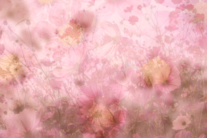 Floral Collage 5: A pretty collage of hearts and flowers in warm pastel colours. You may prefer:  http://www.rgbstock.com/photo/oW3nAaG/Floral+Collage+4  or:  http://www.rgbstock.com/photo/nVCpba2/Wildflower+Collage+3