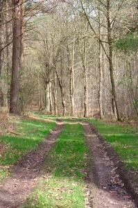 tree path track leaves - photo #14