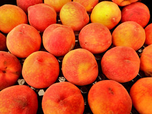 fresh peaches: a large tray of clingstone peaches