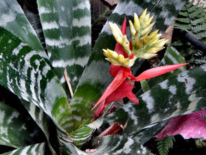 bromeliad background3