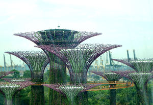 aerial walkway1: Singapore's 22-metres-up above-ground Supertrees aerial walkway