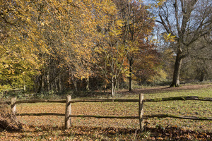 Field corner in autumn: Corner of a field abutting woodland in West Sussex, England, in autumn.