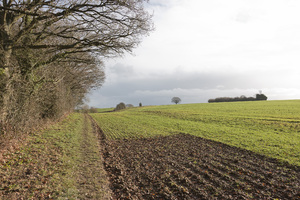 Rural footpath: A footpath through rural landscape in West Sussex, England, in winter.