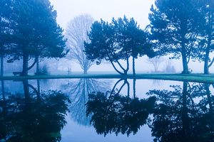 fog and lake reflections
