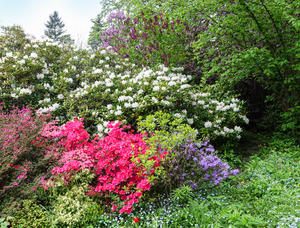 colourful garden bushes