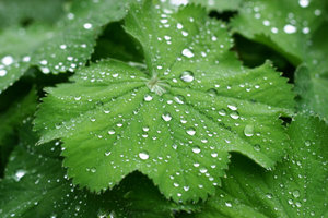 waterdrops on leafs