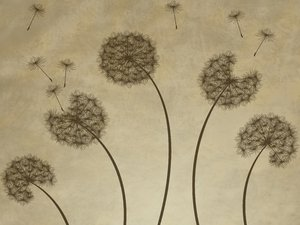 Dandelions Grunge: Dandelions silhouette over a grungy background.