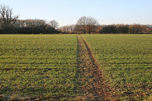 Field path: A field track in late afternoon sunlight in West Sussex, England, in winter.