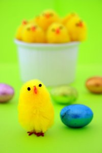 Easter Eggs & Chicks: Chocolate wrapped Easter eggs with yellow Easter chicks in a white bowl