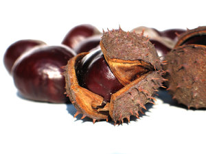 chestnuts 3