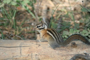 Chipmunk ;-): Pictures of some different Squirrels