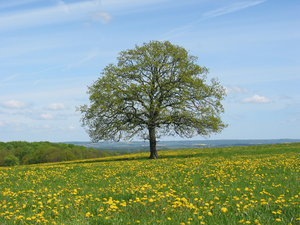 Solitary Tree: Picture taken May 13, 2004, a few km east of Dalby, Skåne, Sweden. Same tree, all seasons:http://www.sxc.hu/photo/8 ..http://www.sxc.hu/photo/8 ..http://www.sxc.hu/photo/7 ..http://www.sxc.hu/photo/1 ..http://www.sxc.hu/photo/1 ..